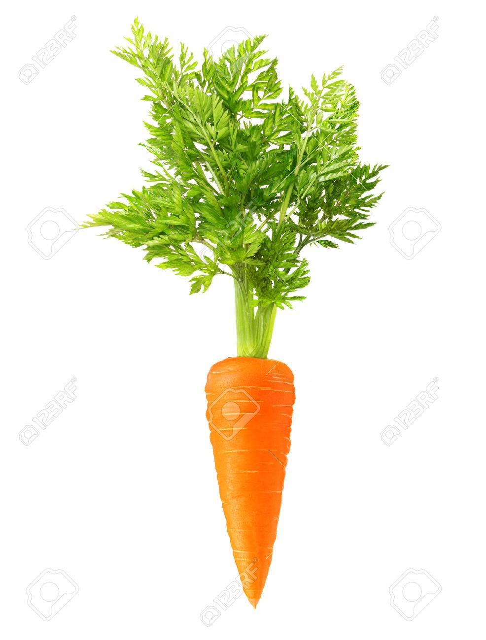 Carrot isolated on white background - 32040308