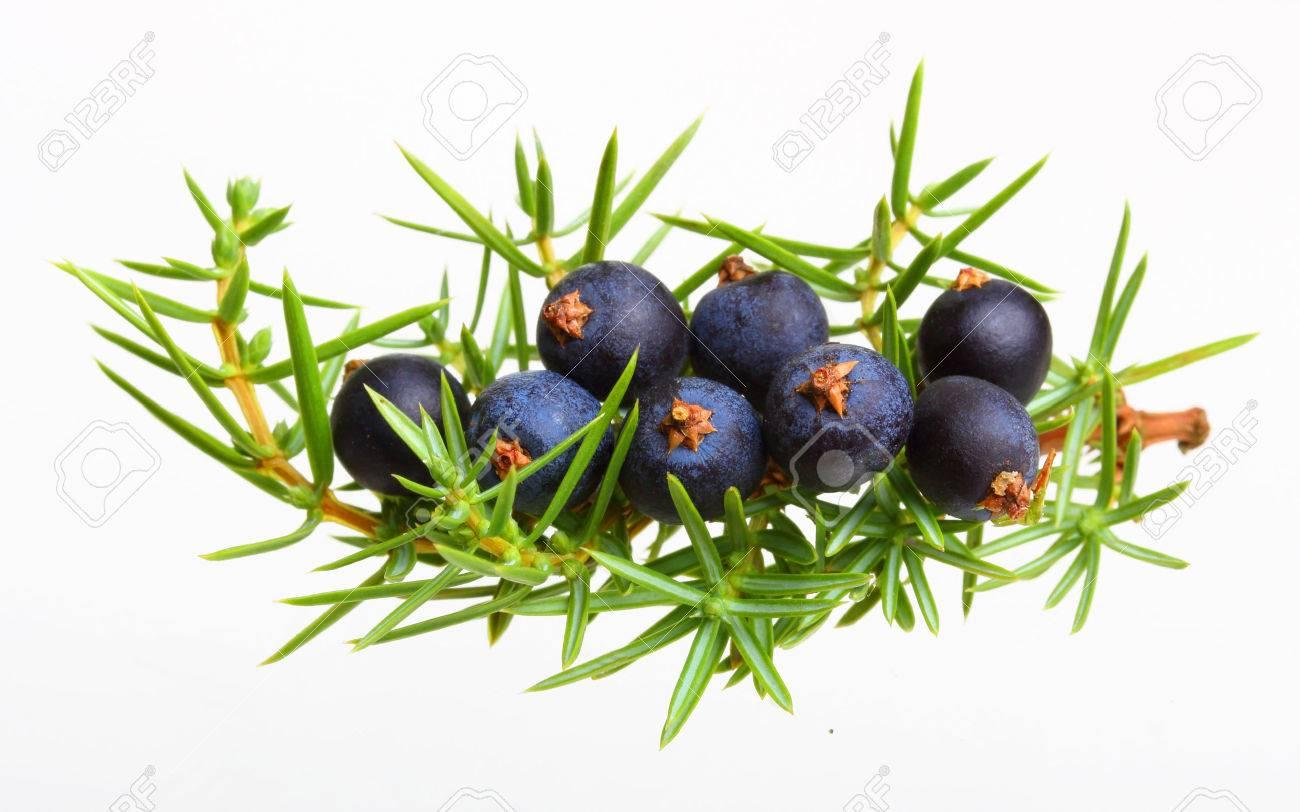 Juniper berries isolated on white - 61201305