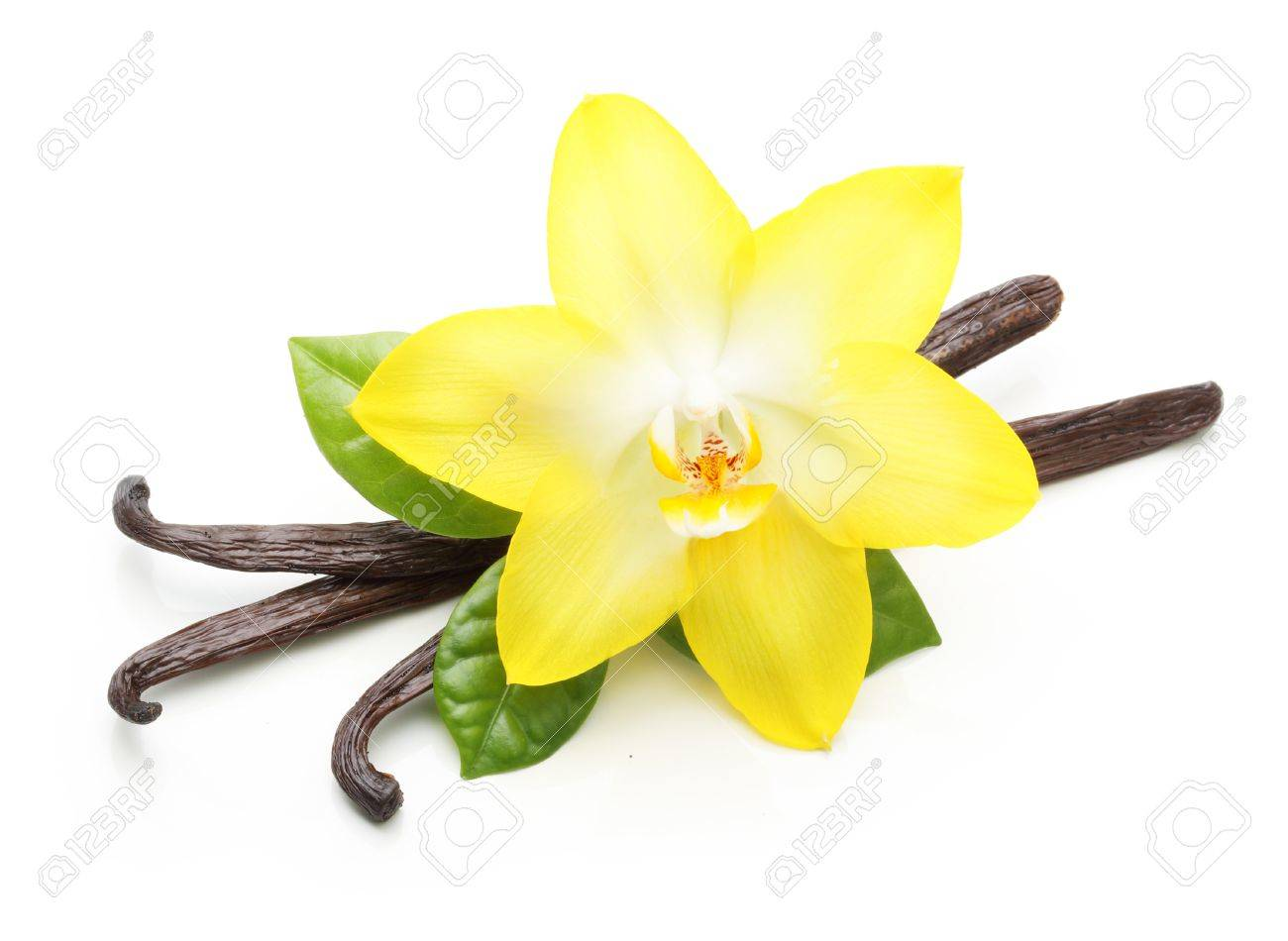 Vanilla pods and orchid flower isolated on white background - 61543909