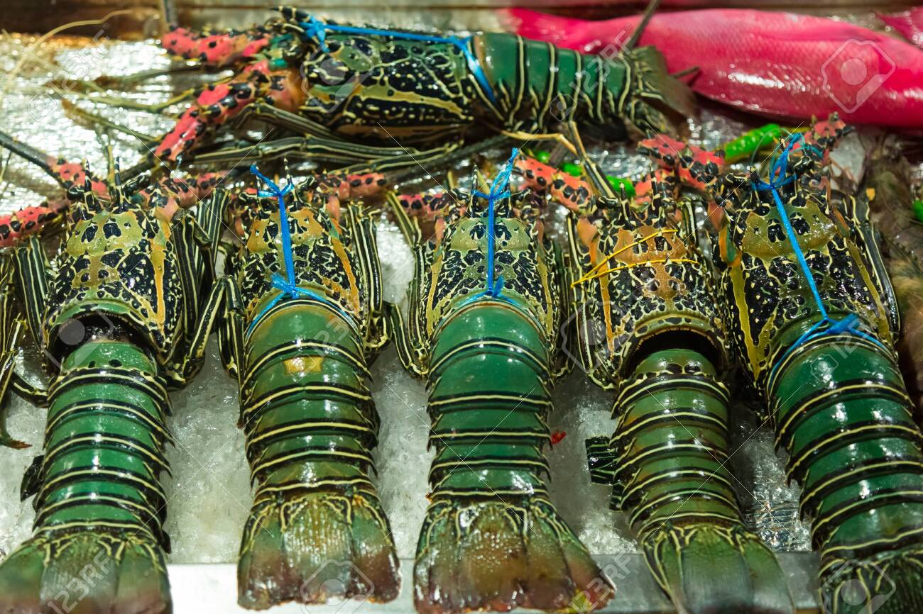 """Ulična hrana"" - STREET FOOD - Page 2 119755957-fresh-lobsters-on-ice-close-up-street-food-in-asia"