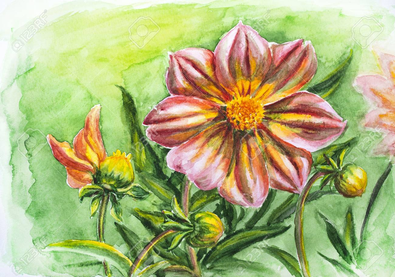 Dahlia Flower Watercolor Painting Stock Photo Picture And Royalty Free Image Image 21980544