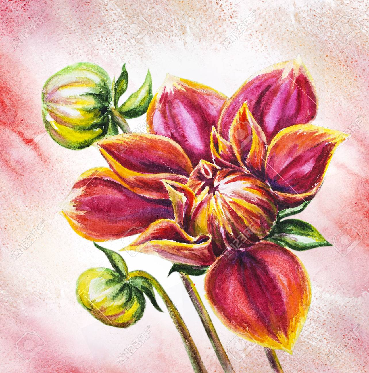 Blooming Dahlia Flower Watercolor Painting Stock Photo Picture And Royalty Free Image Image 22449904