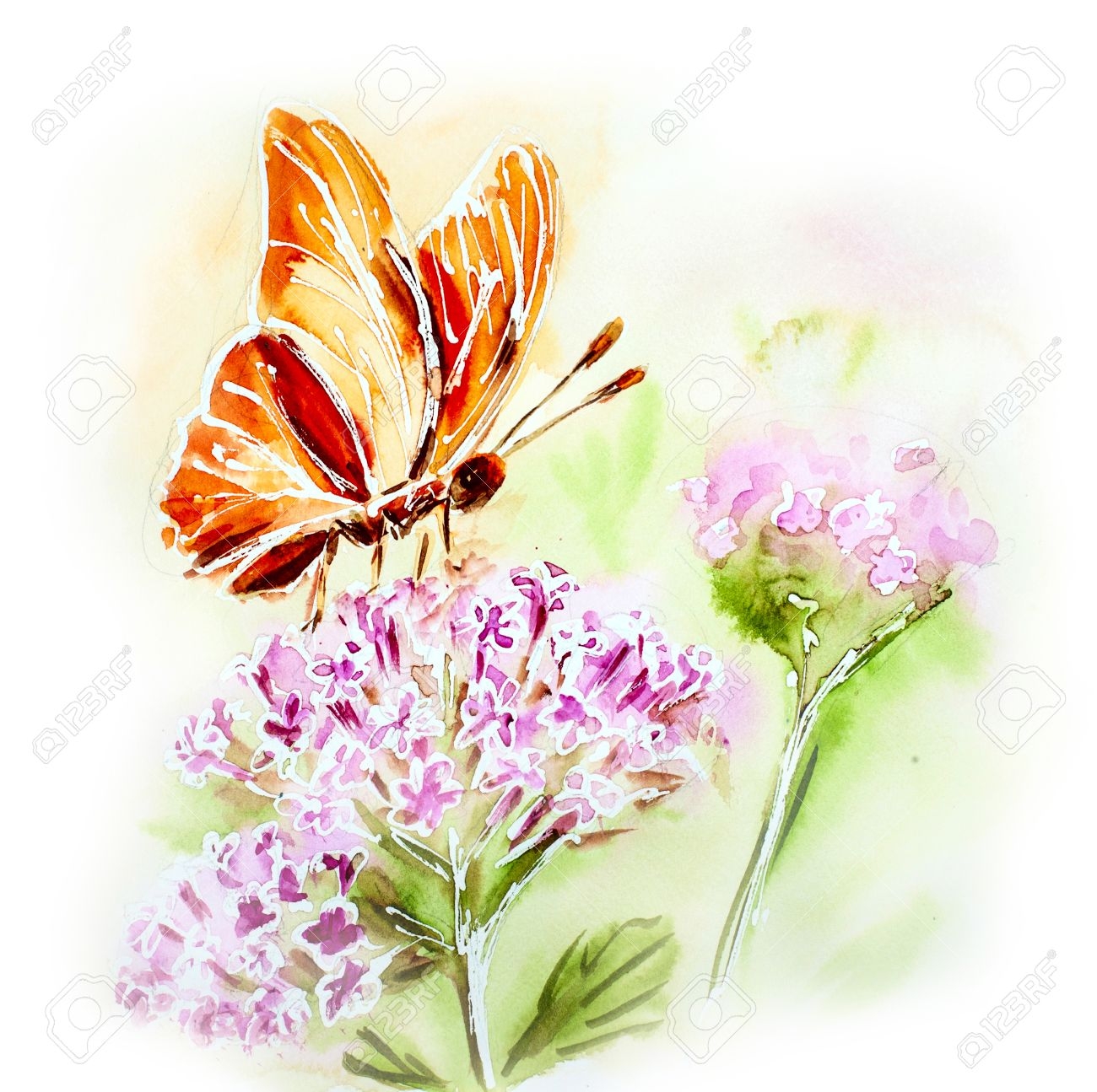butterfly watercolor stock photos royalty free butterfly