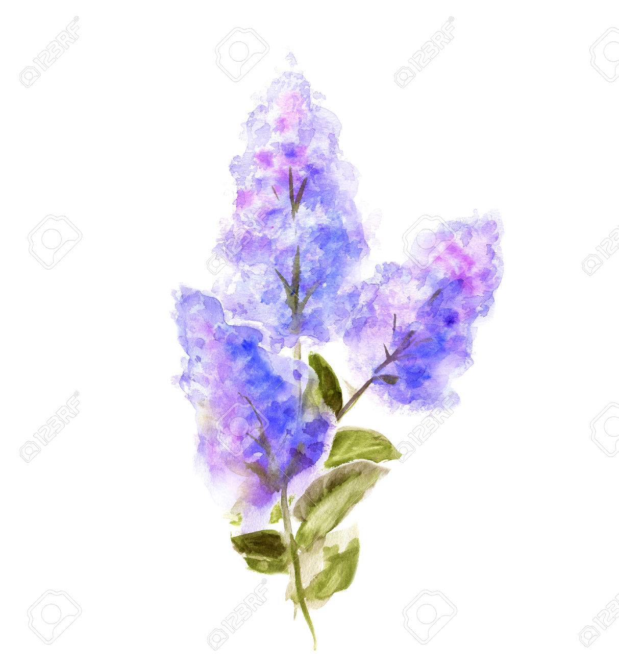 Hand Painted Watercolor Flower Lilac Isolated On White Wet Painting