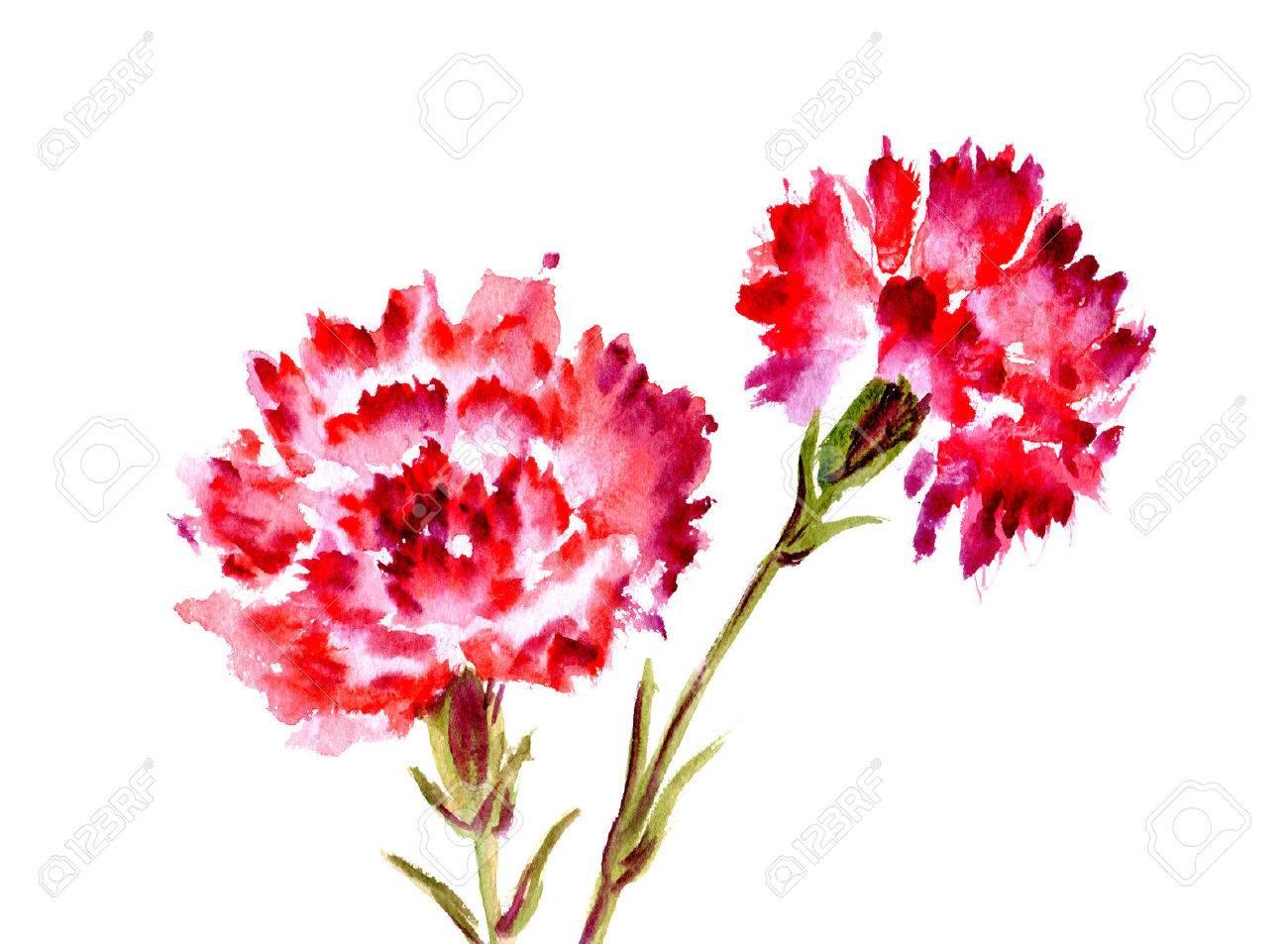 Lieblings Aquarell Zwei Rote Blume Nelke Auf Weißem Hintergrund Lizenzfreie @GW_92