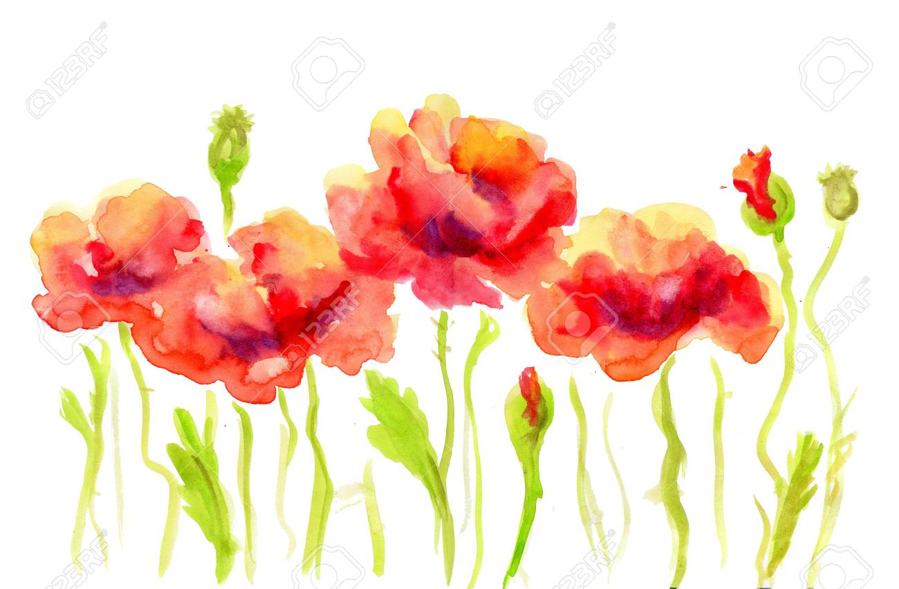 Hand Painted Watercolor Flower Red Poppy. Wet Painting Illustration ...