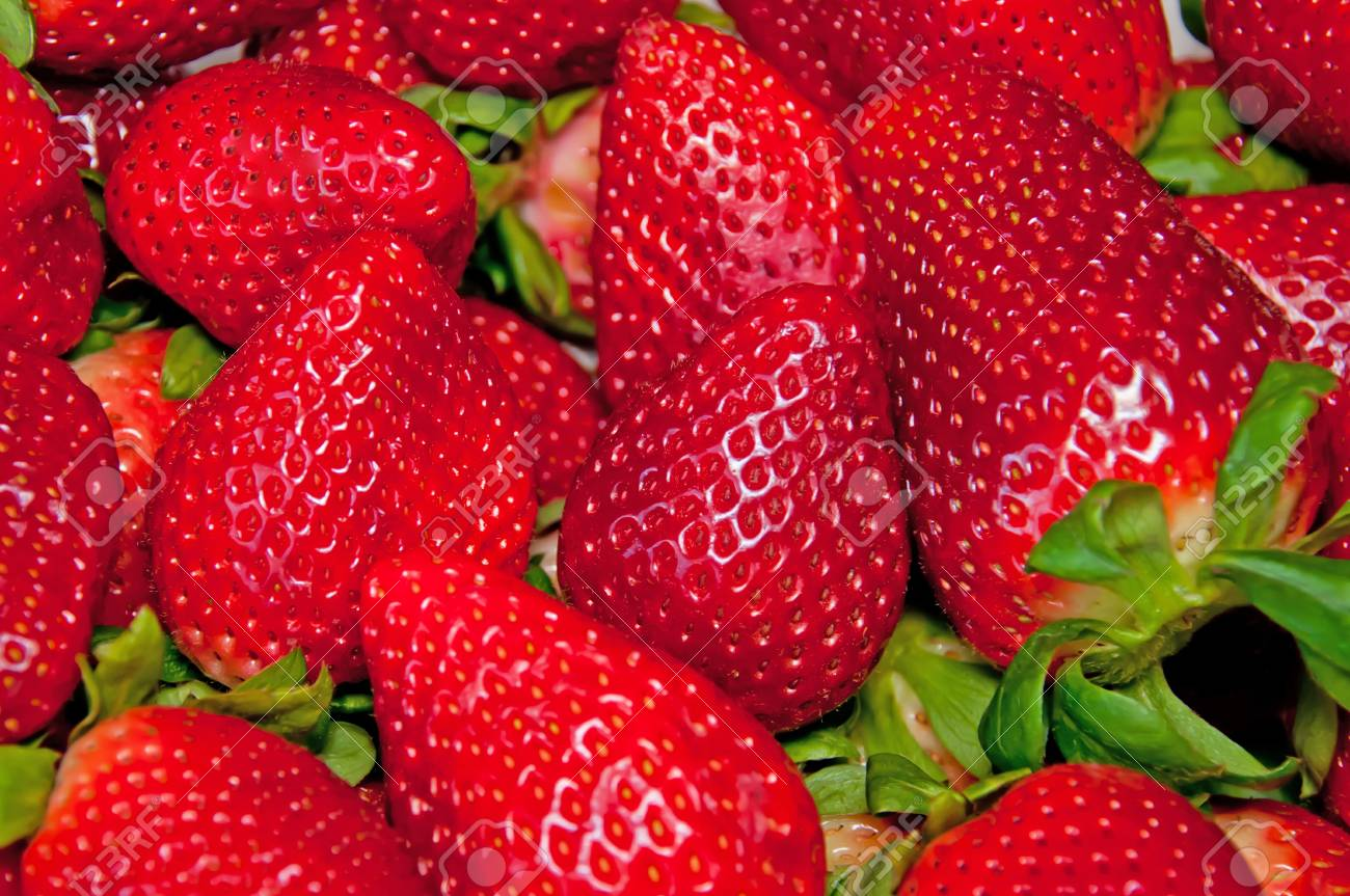 The fresh and juicy  strawberries Stock Photo - 9240013