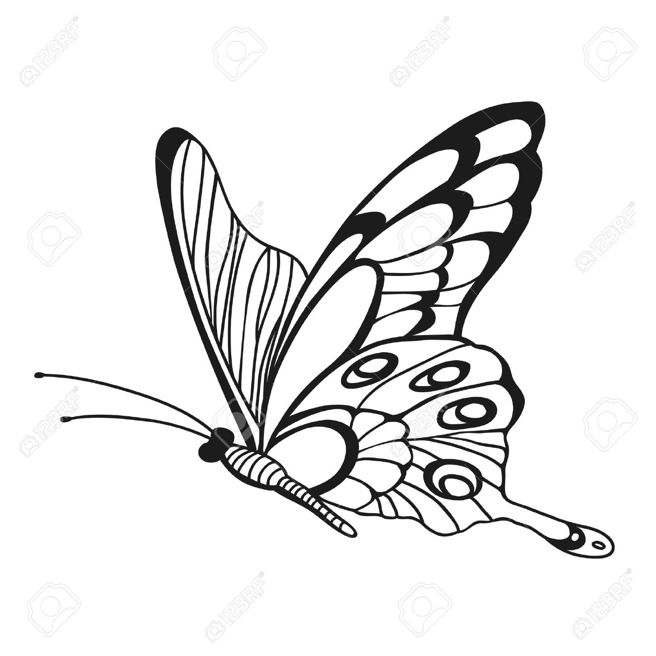Beautiful monochrome butterfly sketch of insect for design and scrapbooking stock vector 39349175