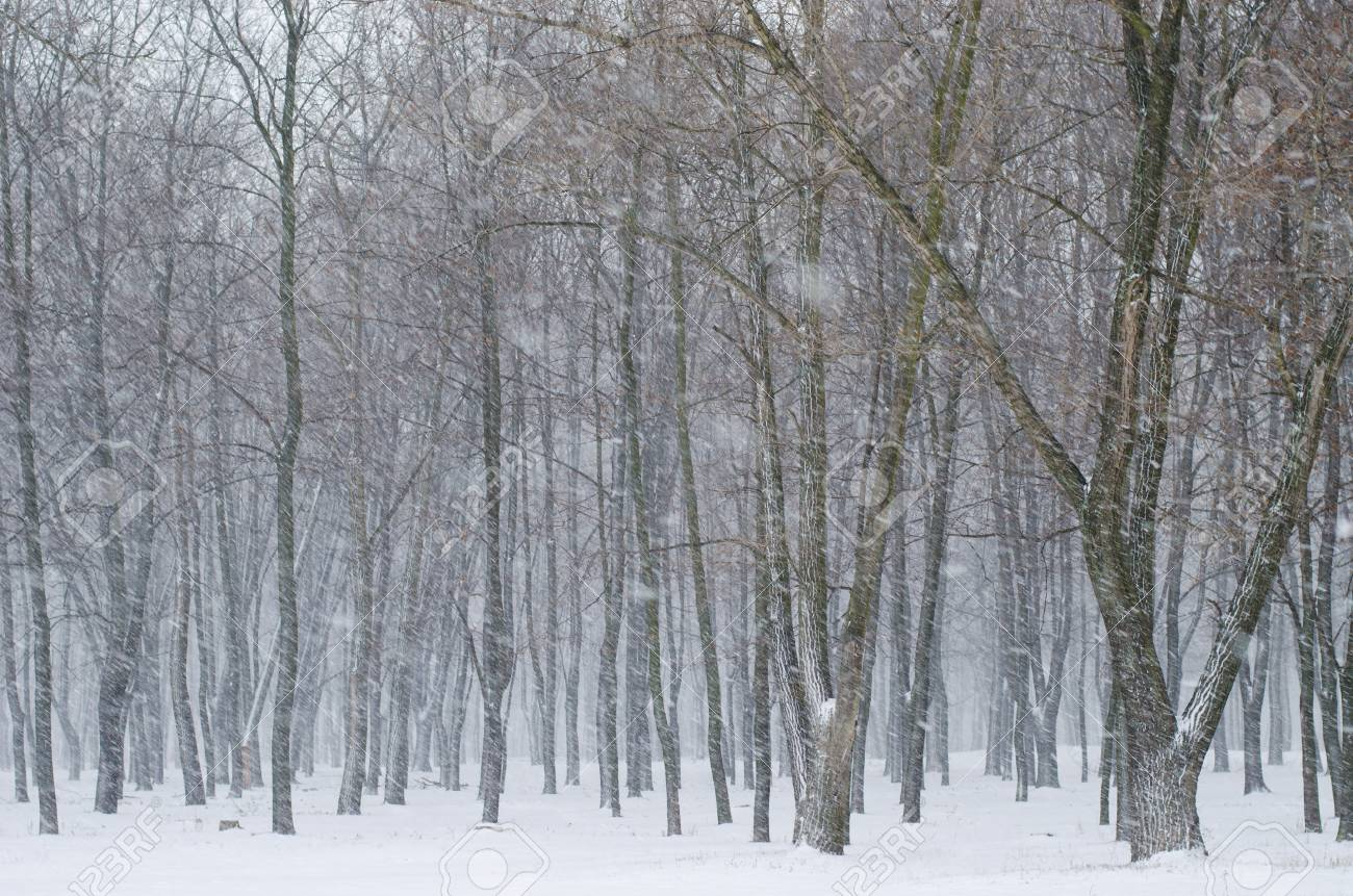 sunrays in the dark winter forest with snow stock photo picture and