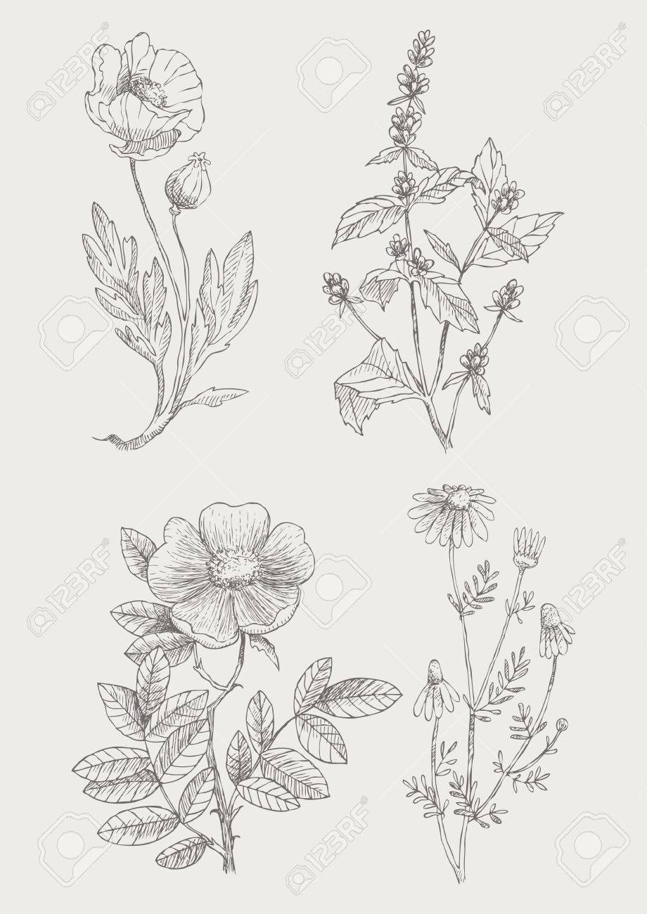 Vintage botanical illustration flowers set