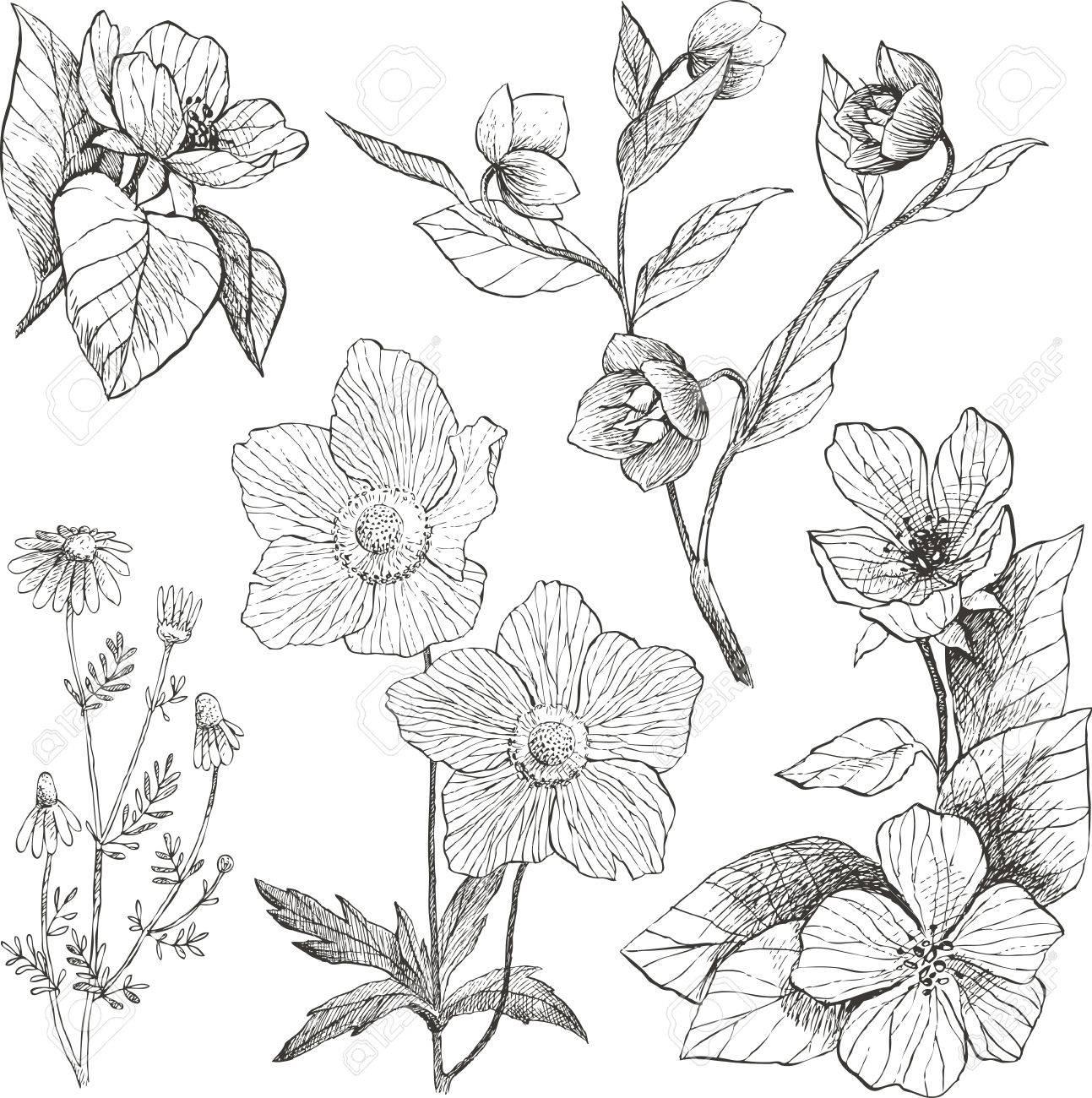ヴィンテージ植物イラスト花セットのイラスト素材ベクタ Image 77600435