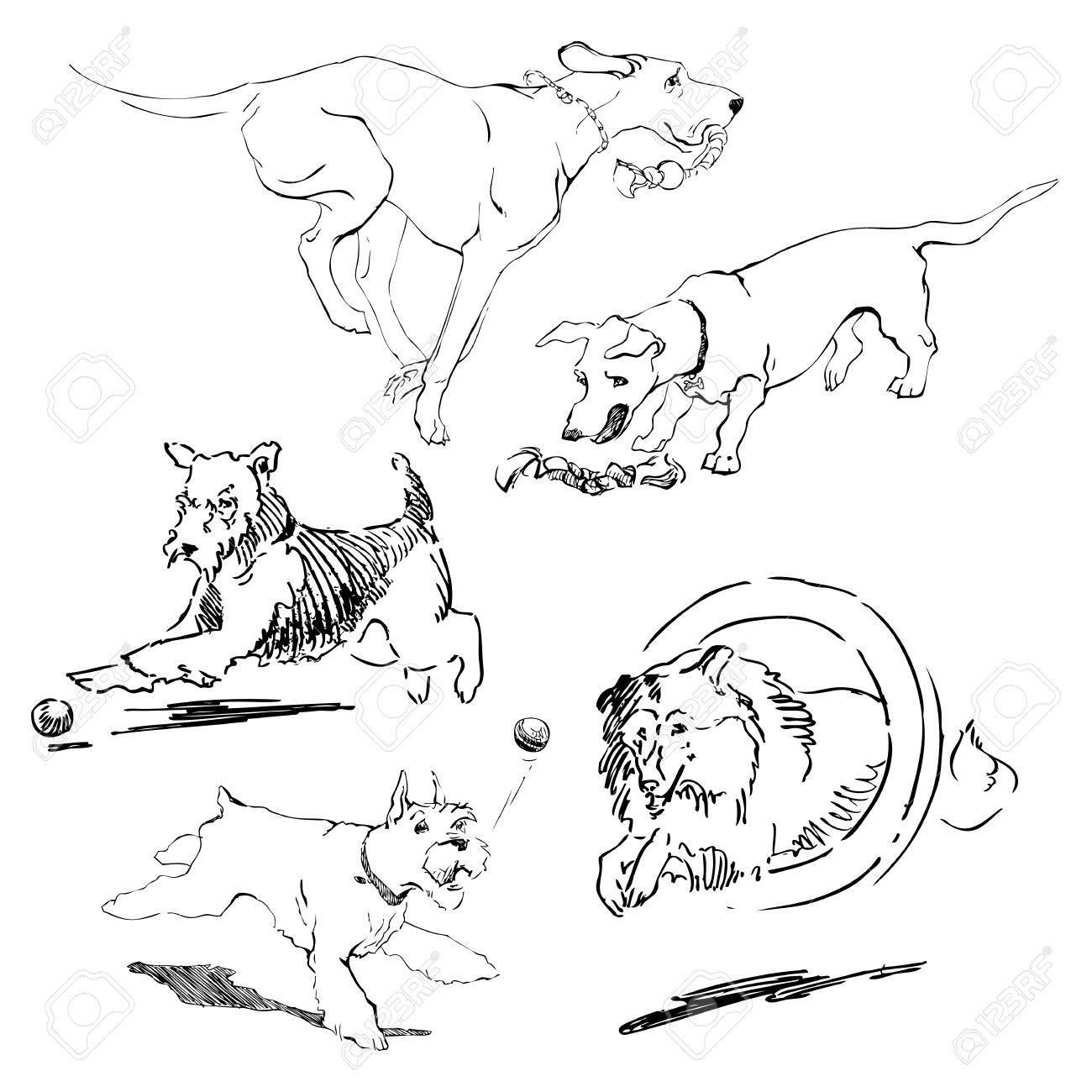 A set of drawings of different breeds dogs in motion games with dogs for a