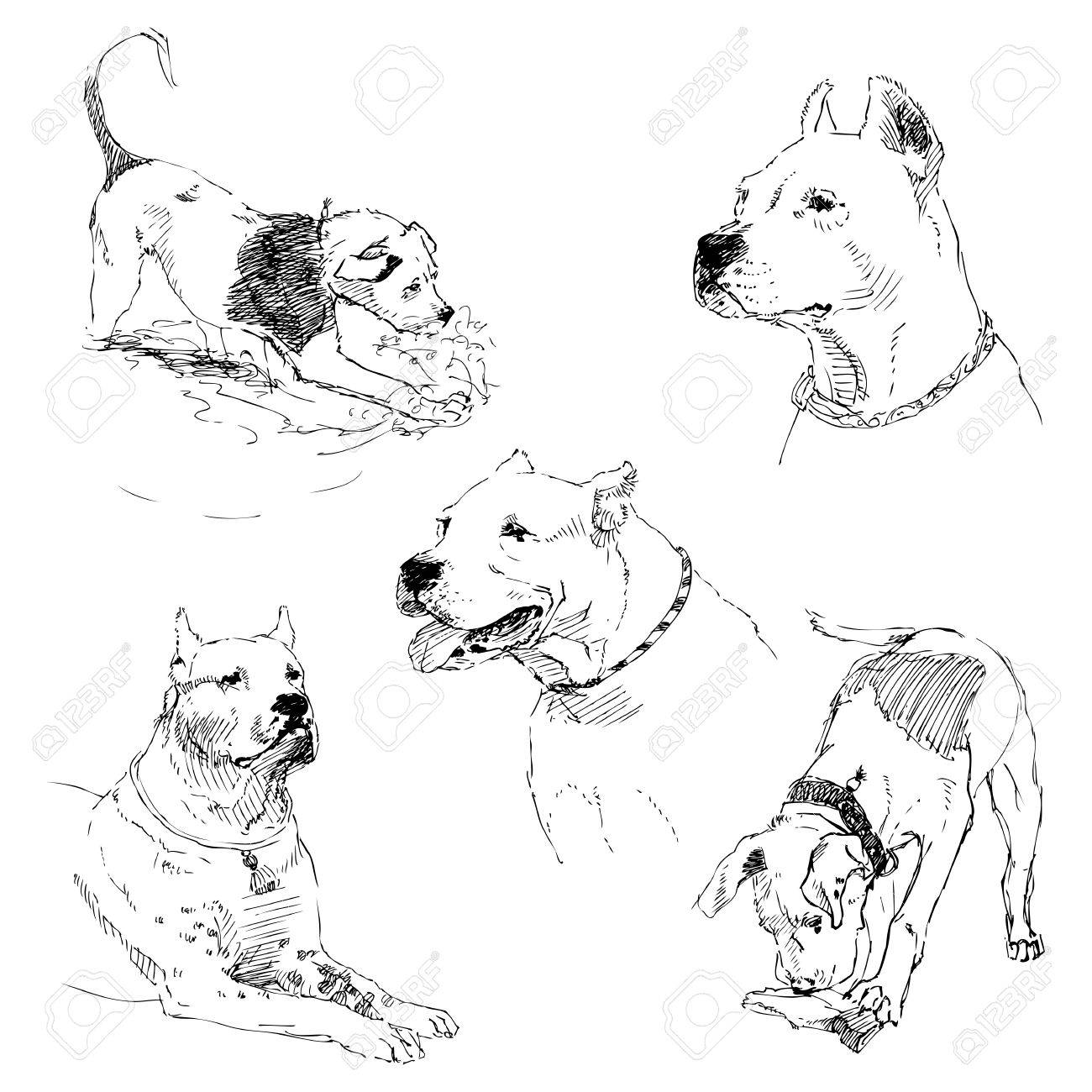 A Set Of Drawings Of Adult Dog And Puppy Highly Detailed Hand