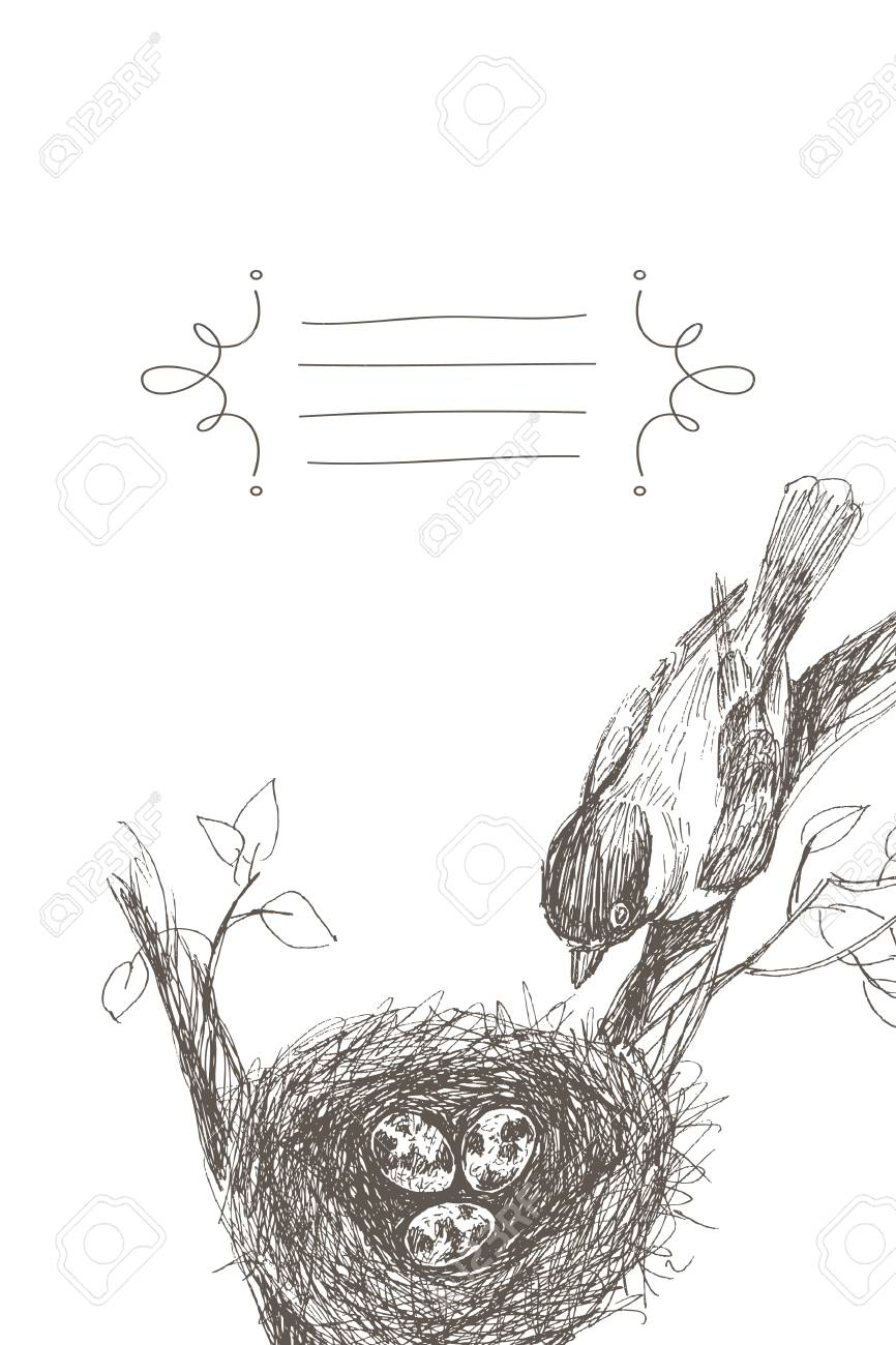 Effect of pencil drawing bird nest robin nest eggs and feathers hand drawn in illustrator with charcoal