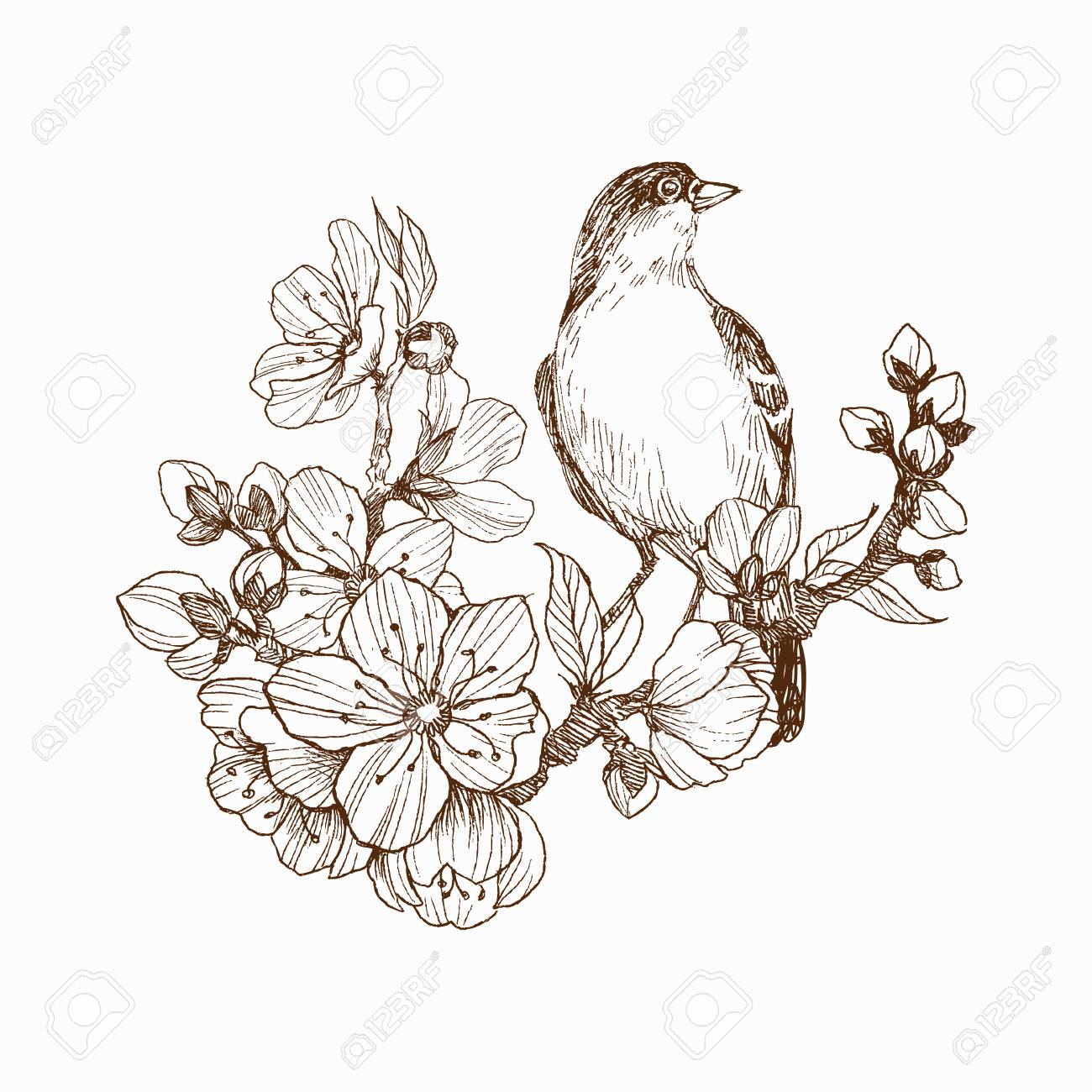 Vector Illustration Of Hand Drawn Bird On Blooming Brunch Graphic