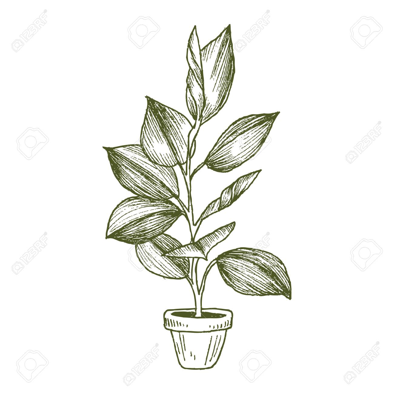 Illustration Of Houseplants, Indoor And Office Plants In Pot Isolated On  White Background. Vector