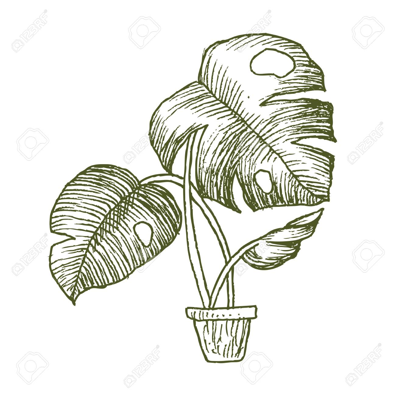 Illustration Of Houseplants Indoor And Office Plants In Pot Royalty Free Cliparts Vectors And Stock Illustration Image 99983472