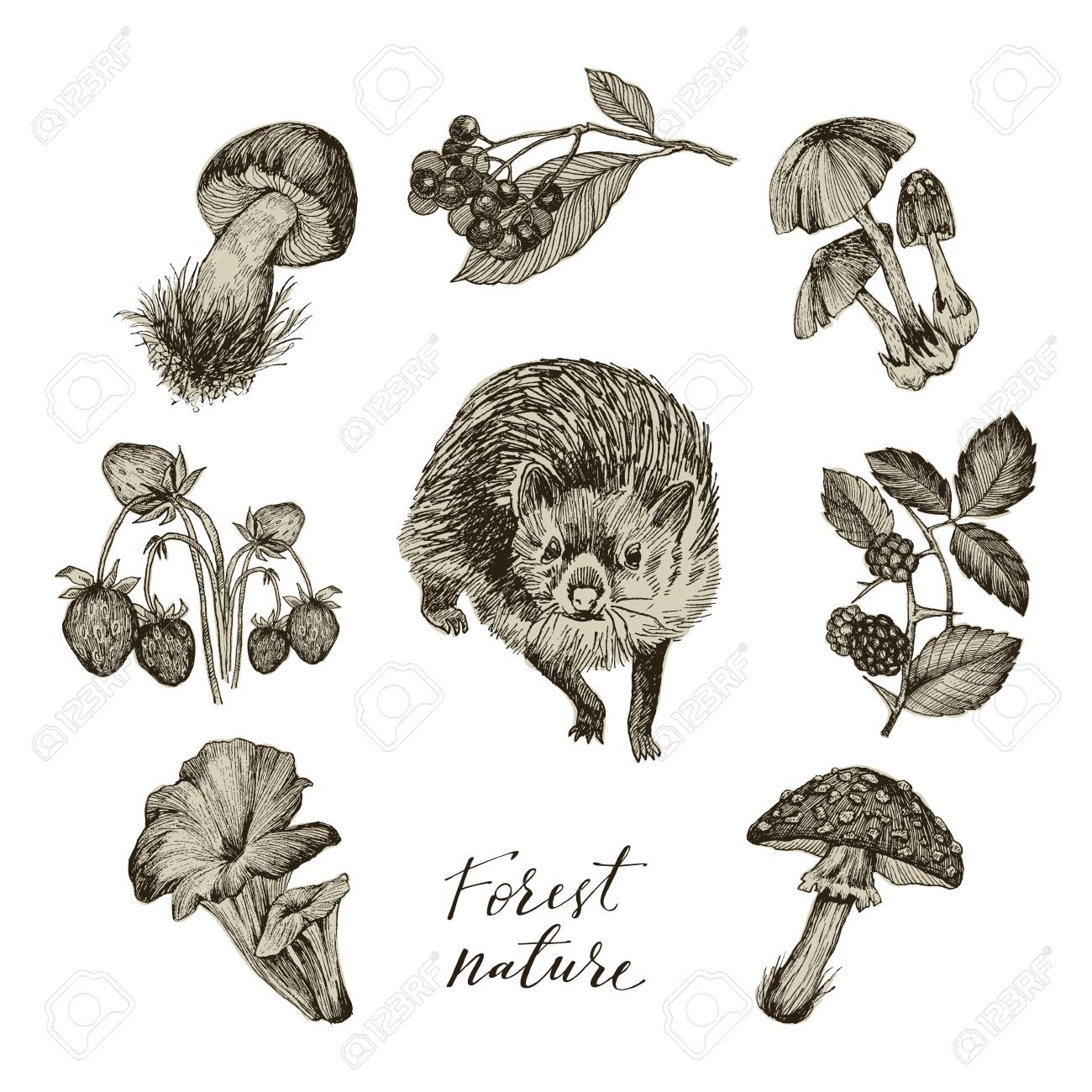 Set of forest nature objects. Plants and animals. Botanical illustration..