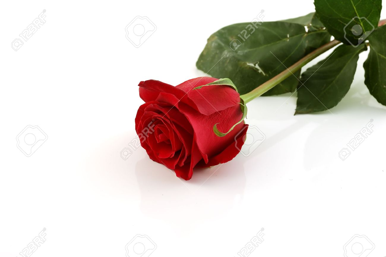 Close-up shot of a red rose bud with water drops on petals Stock Photo - 1728134
