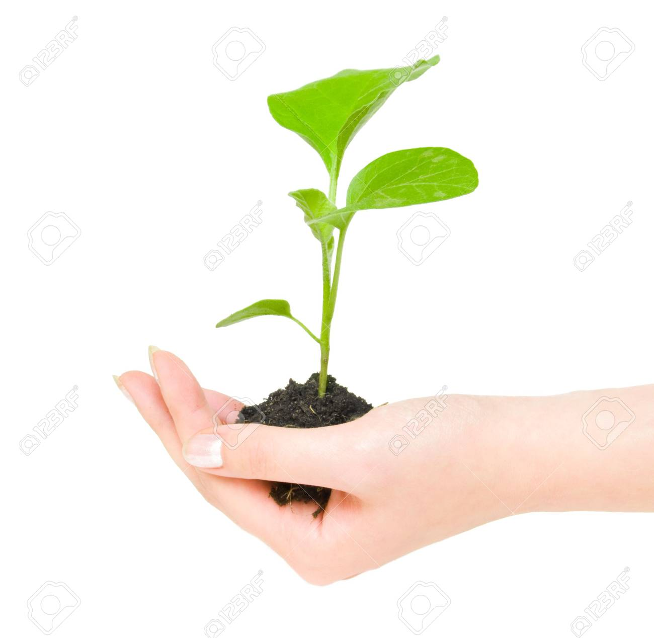 Growing green plant in a hand isolated on white background Stock Photo - 3743033