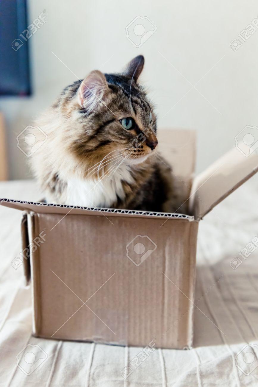 Cat sitting in a cardboard box - 34157881
