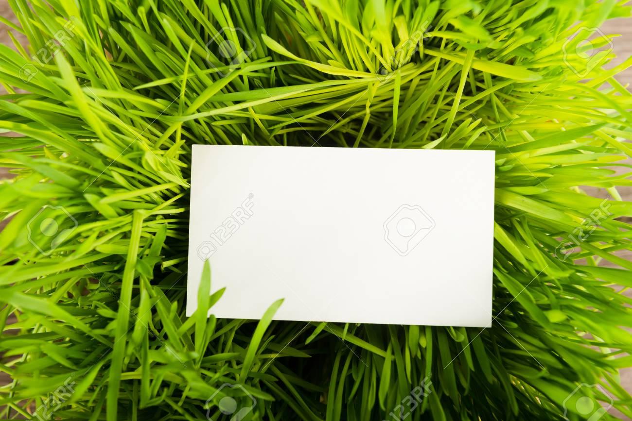 Carte De Visite Vierge Dans Lherbe Verte Fraiche Banque DImages Et