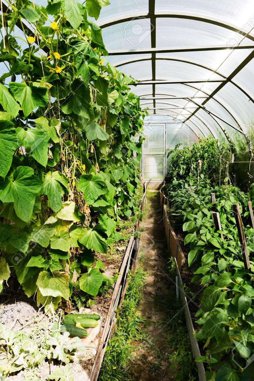 A L\'intérieur En Plastique Couverte Horticulture à Effet De Serre ...