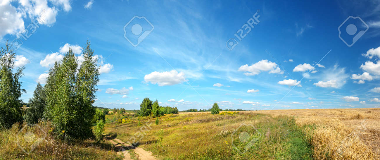 Bright summer rural russian landscape with country road and golden wheat fields - 167524078