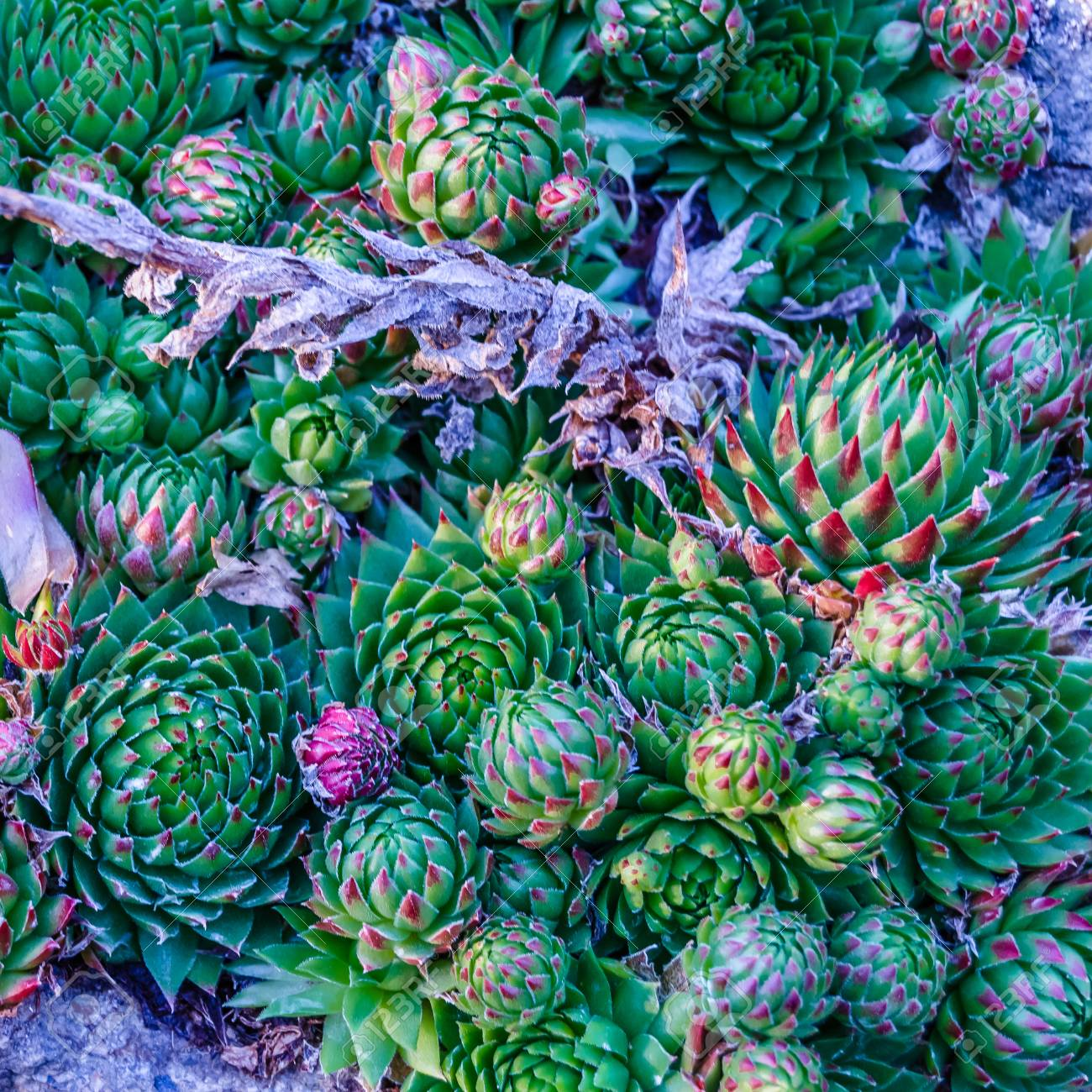 Colorful Background Of Various Small Succulent Plants Stock Photo Picture And Royalty Free Image Image 88996202