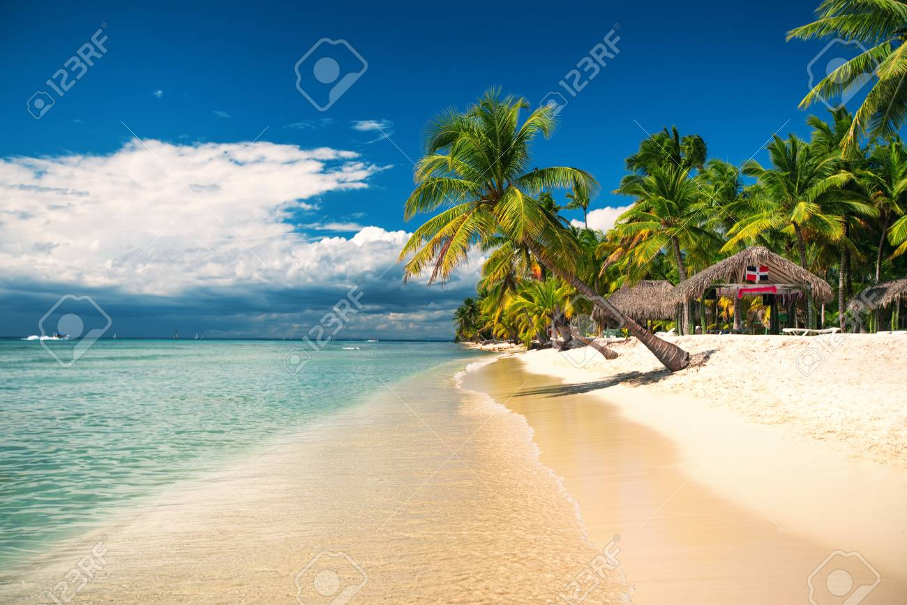 Palm and tropical beach on Saona Island, Dominican republic - 80620905