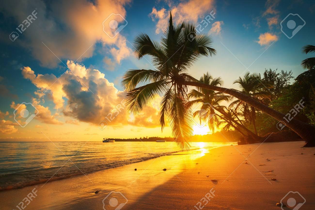 Tropical beach in Punta Cana, Dominican Republic - 80807308