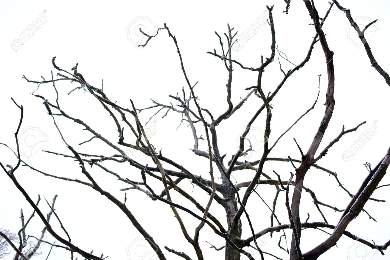 Curves of dry branches crooked tree Stock Photo - 17727097