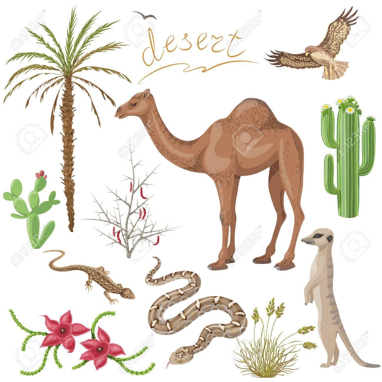 Conjunto De Plantas Del Desierto Y Animales Imágenes Aisladas En ...