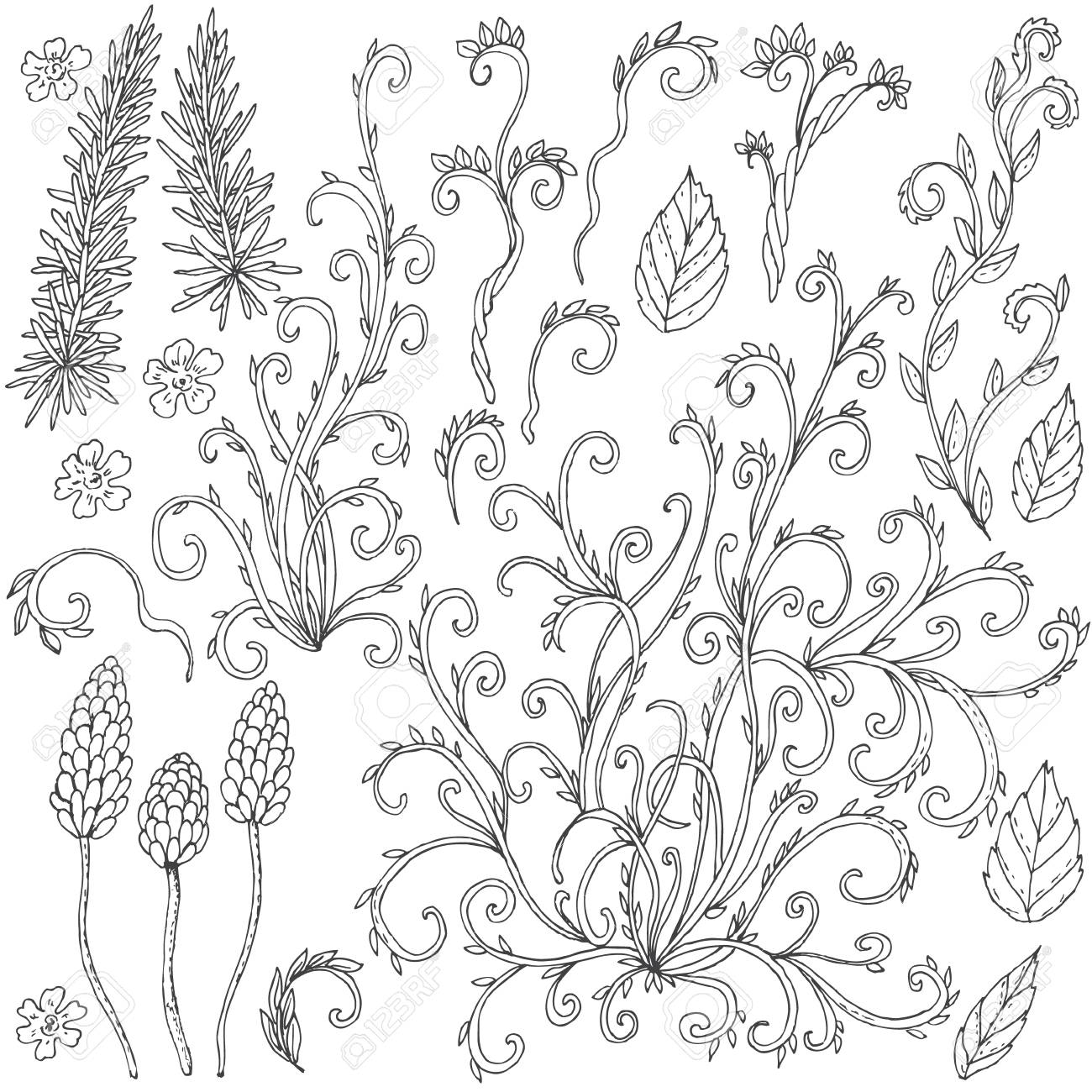 Hand Gezeichnet Set Von Floralen Doodles. Schwarze Und Weiße Blüten ...