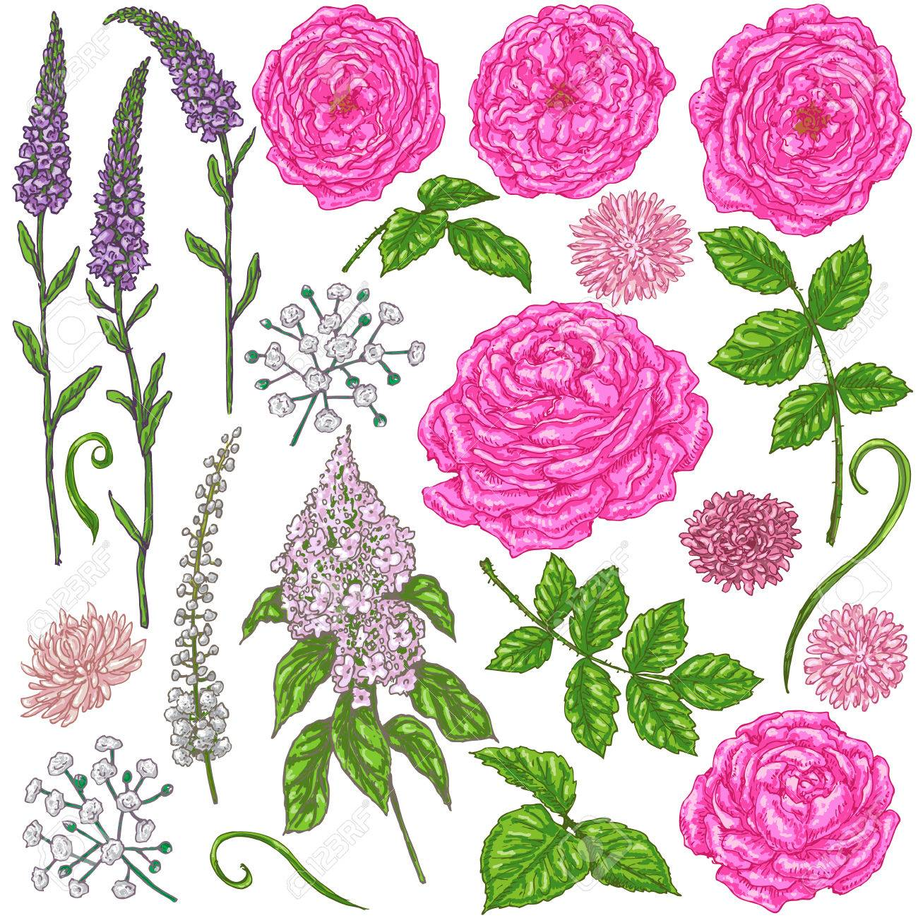Dibujado A Mano Conjunto De Flores Rosas Rosadas Pequenas Flores