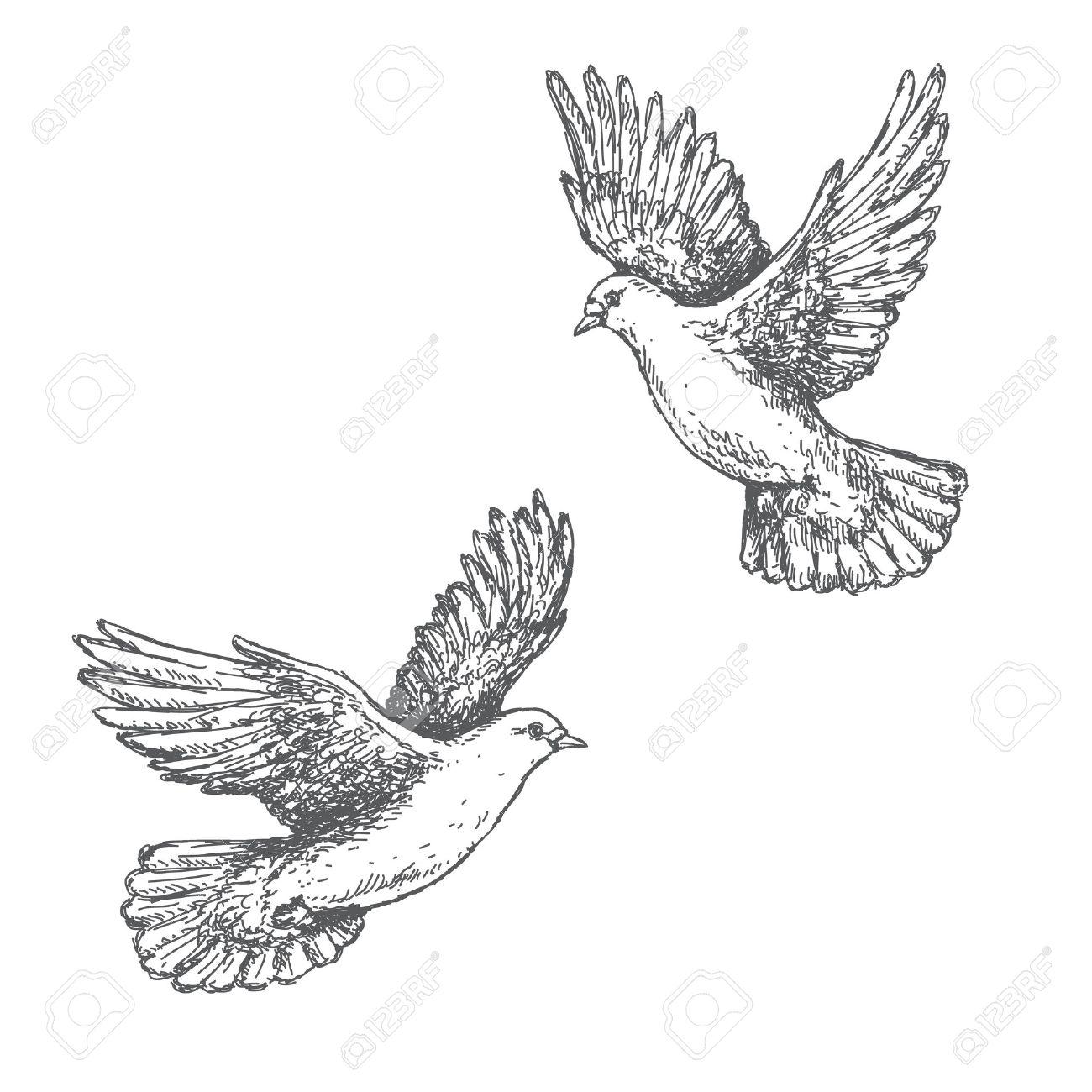 Hand Gezeichnet Paar Fliegen Auf Weißem Hintergrund Tauben Schwarz