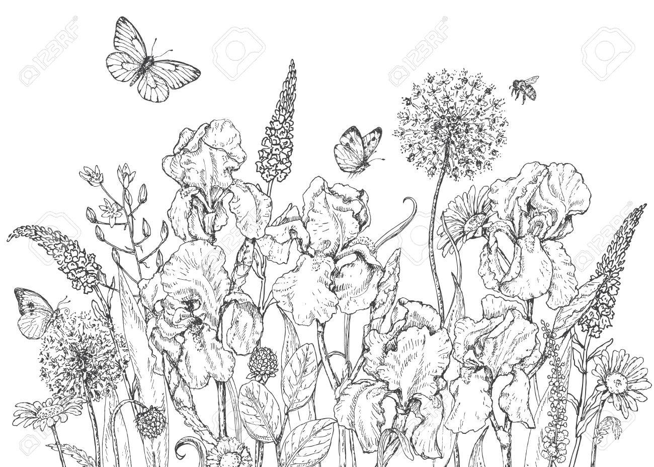 Hand drawn line illustration with iris, wildflowers and insects. Black and white doodle wild flowers, bees and butterflies. Monochrome floral elements. Coloring page. Vector sketch. - 58793779