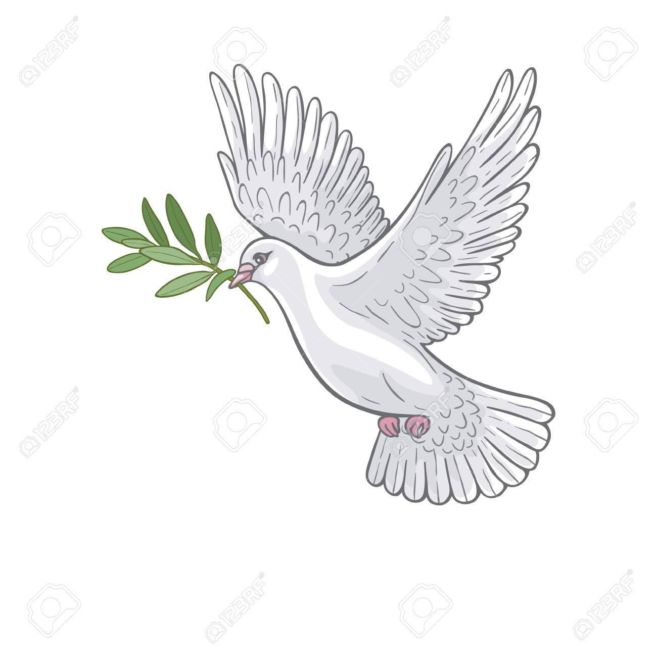 Hand Drawn White Flying Dove With Olive Branch Royalty Free Cliparts Vectors And Stock Illustration Image 60230748