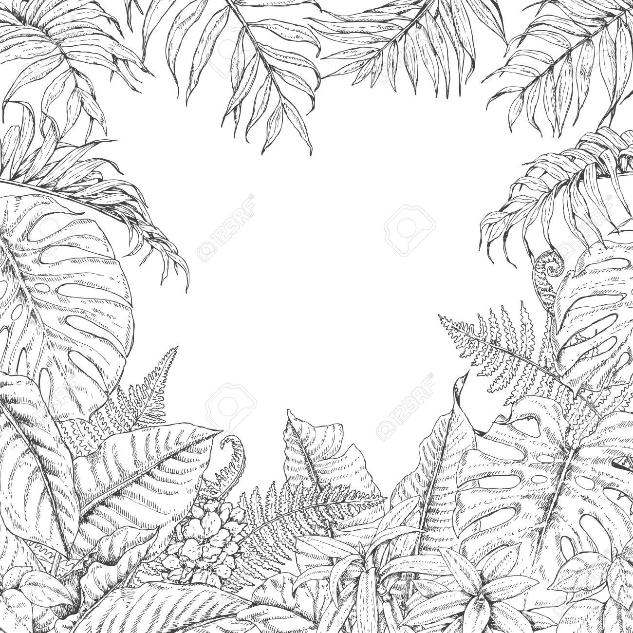 Hand Gezeichnete Zweige Und Blätter Von Tropischen Pflanzen