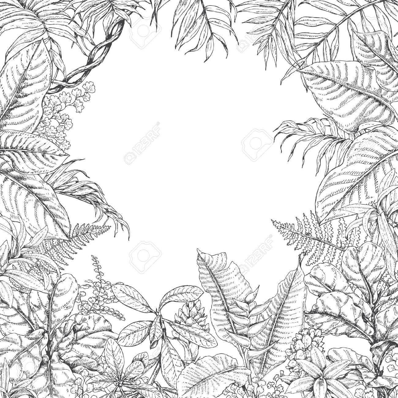 Black And White Illustration Coloring Page For Adult Hand Drawn Branches Leaves Of Tropical Plants Monochrome Square Floral Frame Dieffenbachia