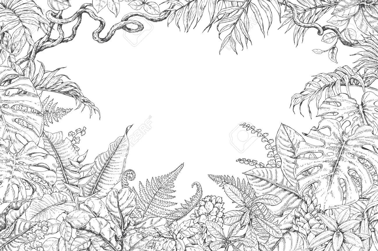 Hand Drawn Branches And Leaves Of Tropical Plants Monochrome
