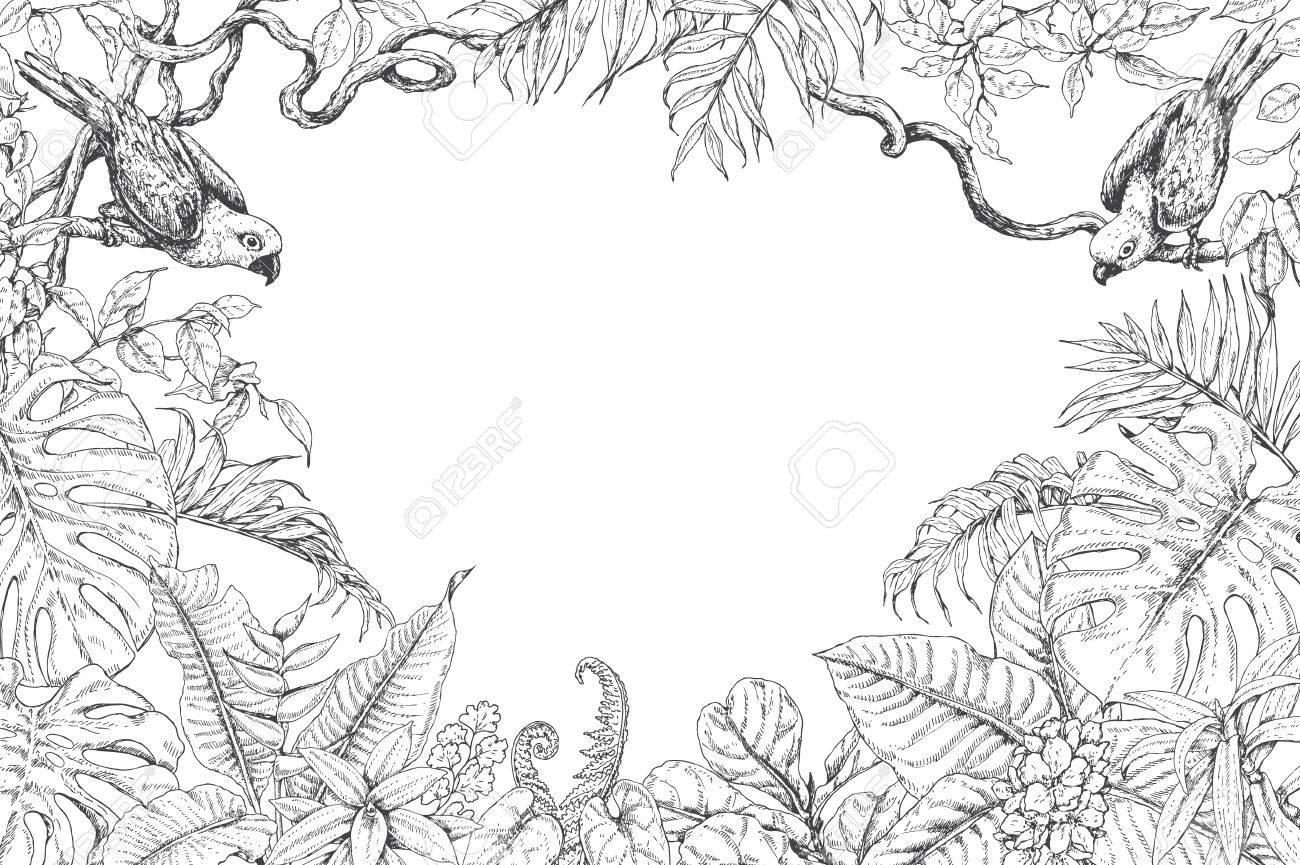 Ramas Dibujadas A Mano Y Hojas De Plantas Tropicales Monocromático Rectángulo Horizontal Marco Floral Con Pájaros Que Se Sientan En Las Ramas De