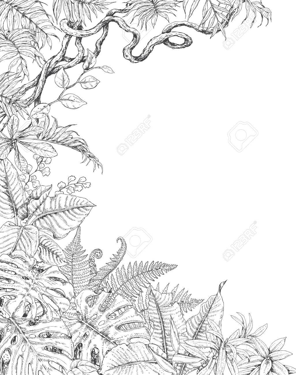 Hand Drawn Branches And Leaves Of Tropical Plants One Sided