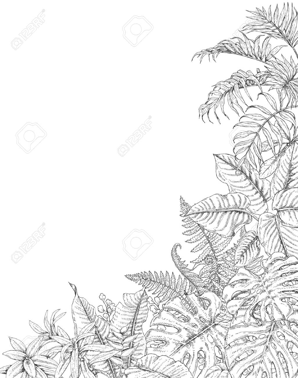 Hand Drawn Branches And Leaves Of Tropical Plants Corner Background