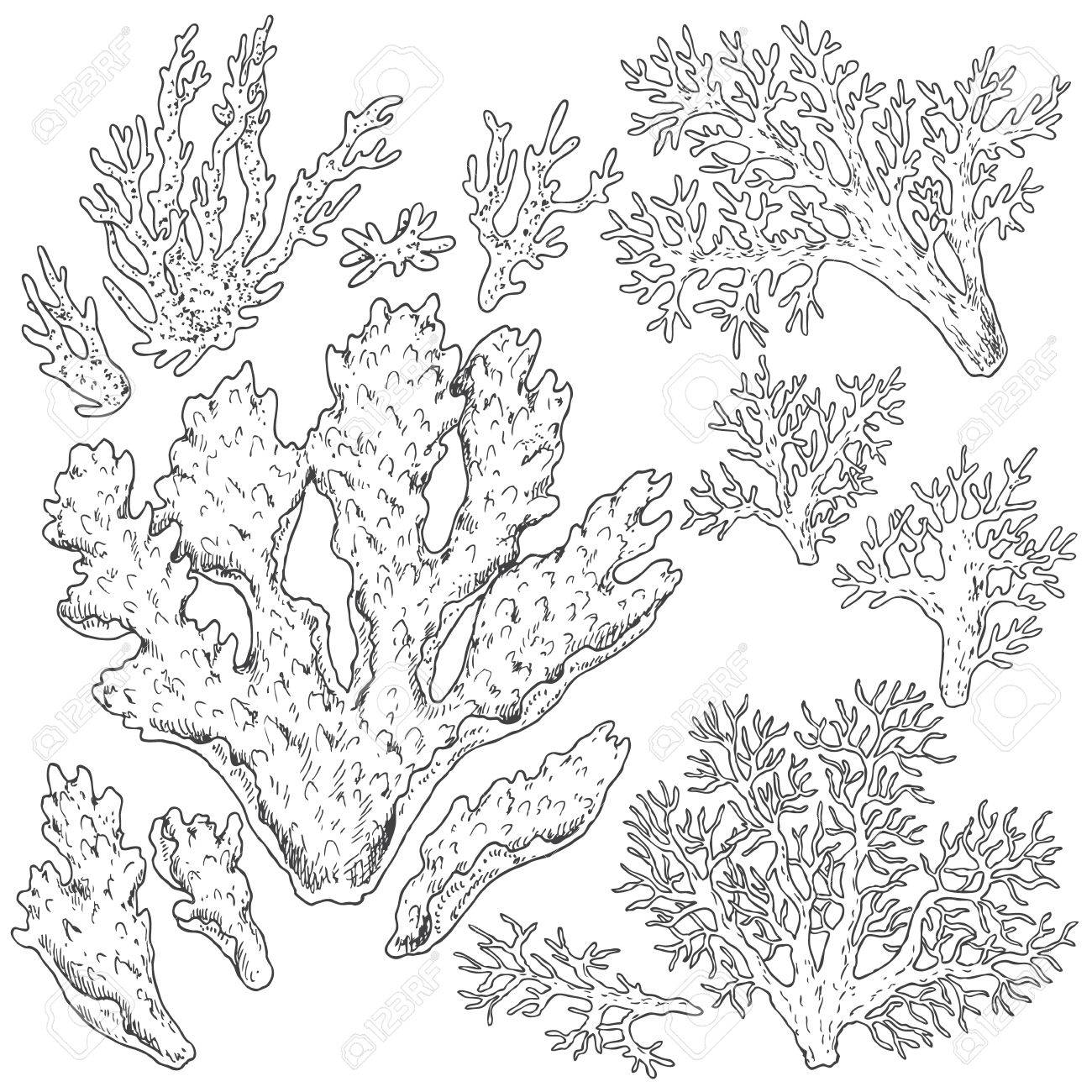 Dibujado A Mano Elementos Naturales Bajo El Agua Bosquejo De Corales De Arrecife Página Para Colorear De Ilustración Conjunto Blanco Y Negro