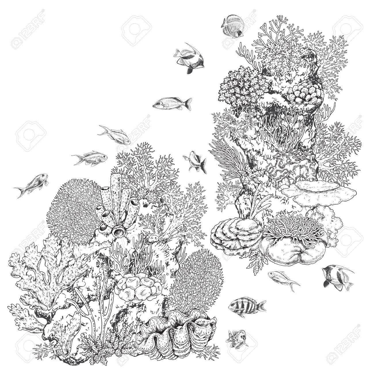 Elementos Naturales Subacuáticos Dibujados A Mano Bosquejo De Corales De Arrecife Y Peces De Natación Monocromo Colonia De Coral En La Roca