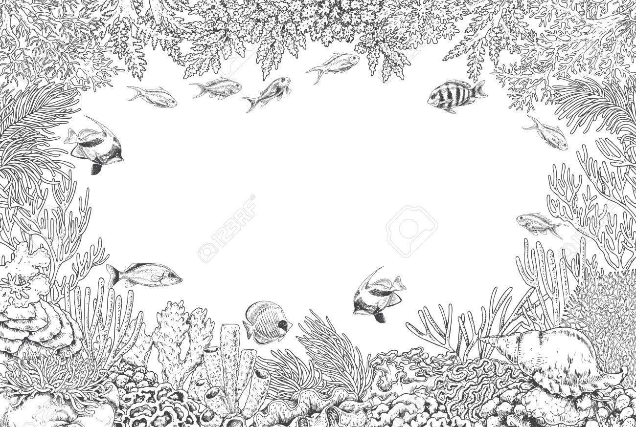 Elementos Naturales Subacuáticos Dibujados A Mano. Bosquejo De ...