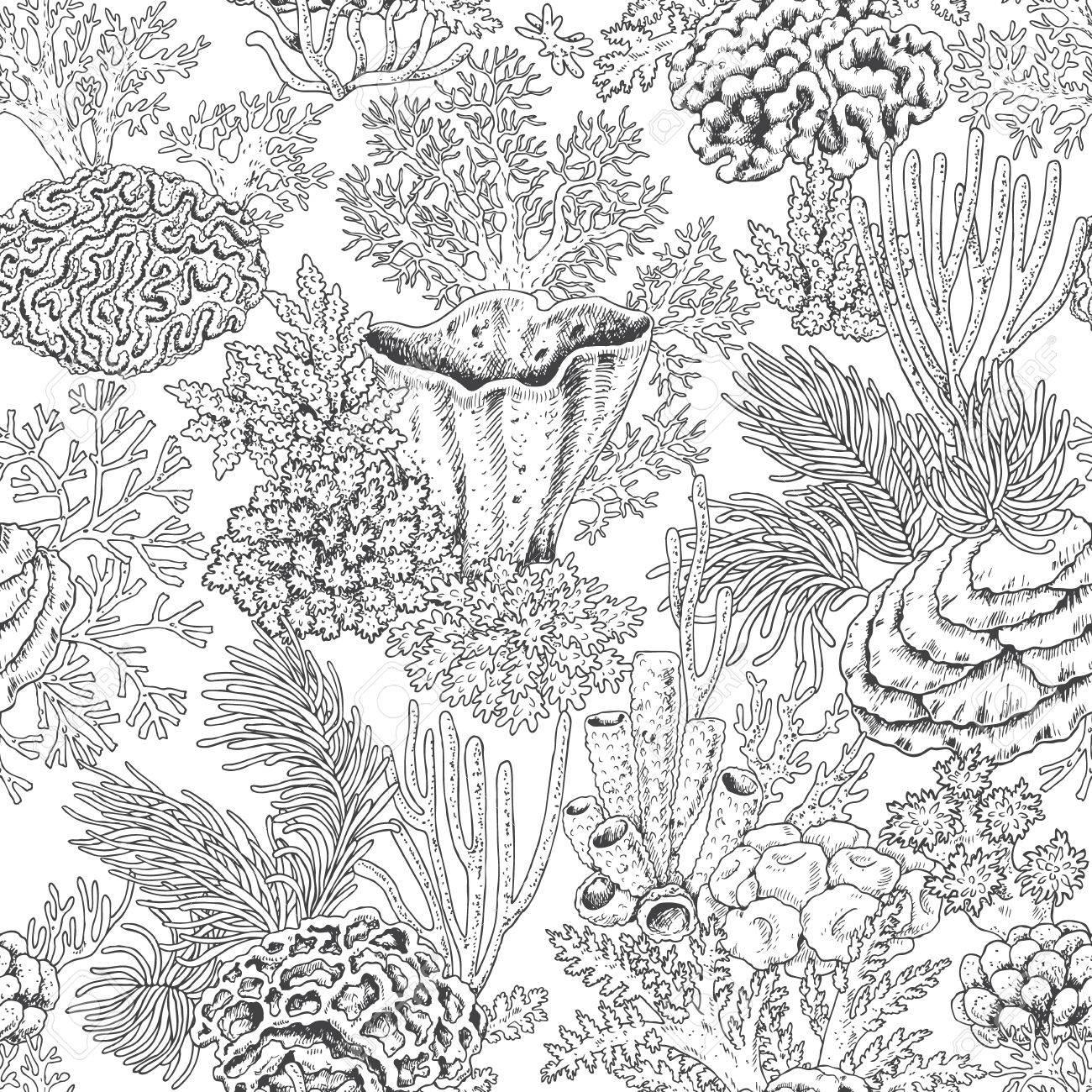 Dibujado A Mano Elementos Naturales Bajo El Agua Sin Patrón Con Los Arrecifes De Coral Textura Del Mar En Blanco Y Negro De Fondo Página En