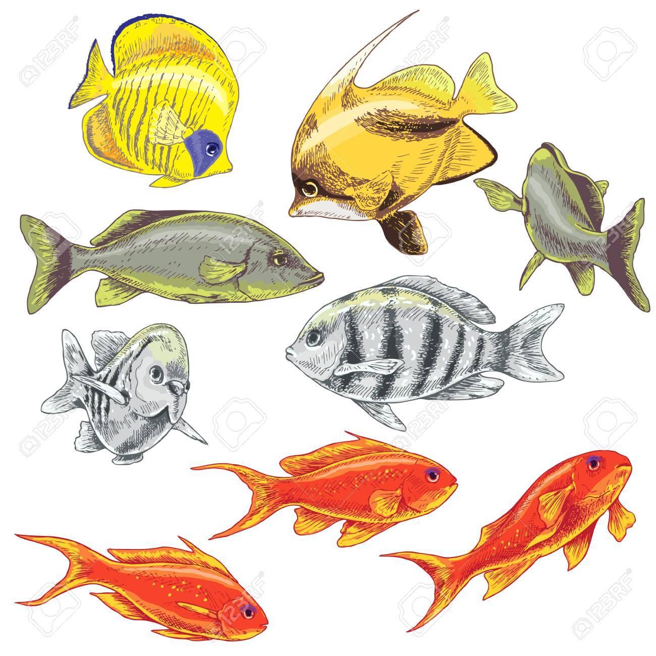 Hand Gezeichnete Unterwasser Natürliche Elemente. Farbige Fische ...
