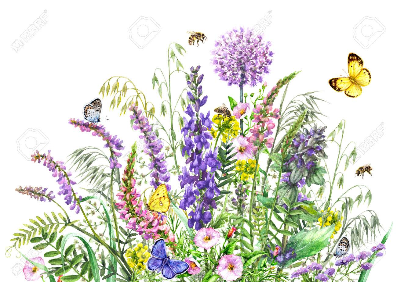 Hand drawn wild flowers and insects. Watercolor vivd wildflowers..